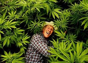 Friar cannabis culture australie chanvre