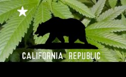 Le cannabis en Californie